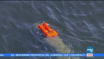 Rescatan a manatí con un salvavidas atorado en Florida