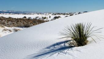 Nieve_Desierto