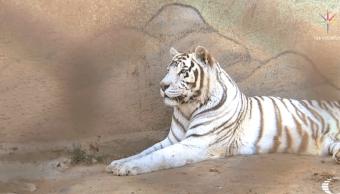 Animales de circo tienen destino incierto tras ley que prohíbe su uso en espectáculos
