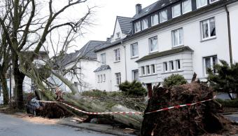 Un árbol cayó sobre un coche en Dortmund, Alemania