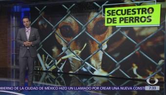 Aumenta secuestro de perros en la CDMX, los delincuentes piden rescates