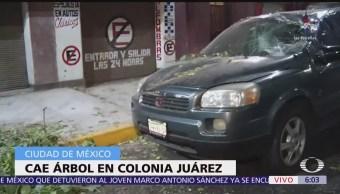Cae árbol sobre camioneta en la colonia Juárez, CDMX