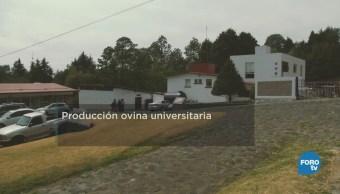Centro Enseñanza Investigación Extensión Producción Ovina
