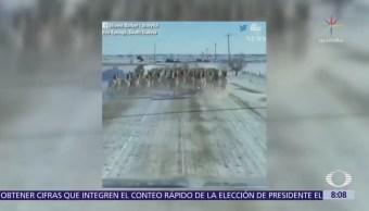 Coche corre entre antílopes en Dakota del Sur