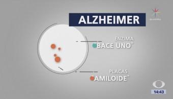 Descubren enzima contra el Alzheimer