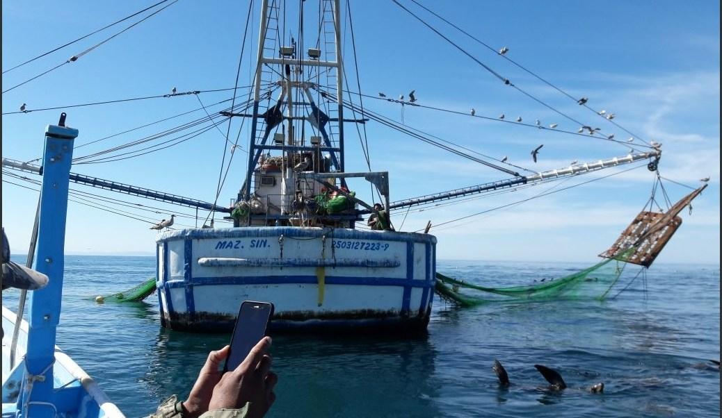 Profepa asegura embarcación camaronera por pesca ilegal en BC