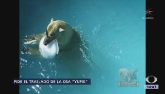 Eugenio Derbez Traslado Osa Polar Reino Unido