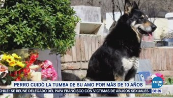 Extra Extra: Perro cuida la tumba de su amo por más de 10 años