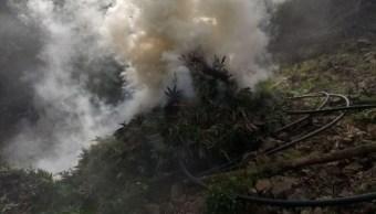 Destruyen más de 222 mil plantas de amapola y marihuana, en Jalisco
