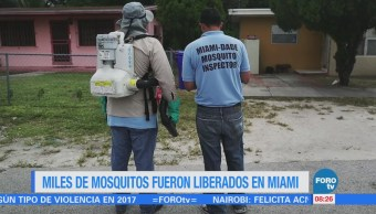 Extra Miles Mosquitos Fueron Liberados Miami