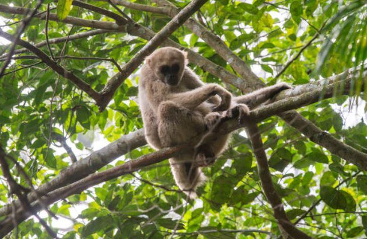 'The Jungle Place', segunda oportunidad de vida para el mono araña