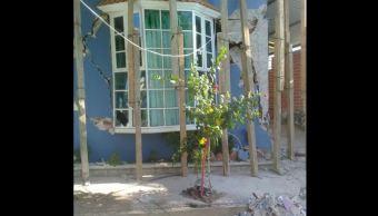 sismo viviendas municipios oaxaca afectadas proteccion