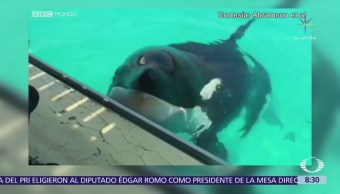 Orca en Francia imita sonidos humanos