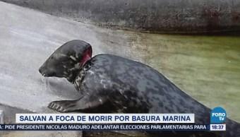 Salvan a foca de morir por basura marina