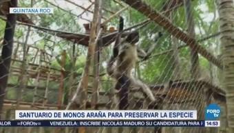 Santuario Monos Araña Quintana Roo