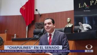 Senado aprueba licencias a legisladores que buscan gubernaturas y otros cargos en elecciones