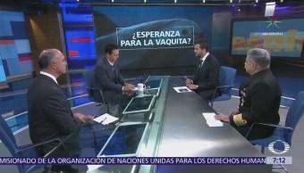 Supervivencia Vaquita Marina Tráfico Totoaba Análisis Despierta