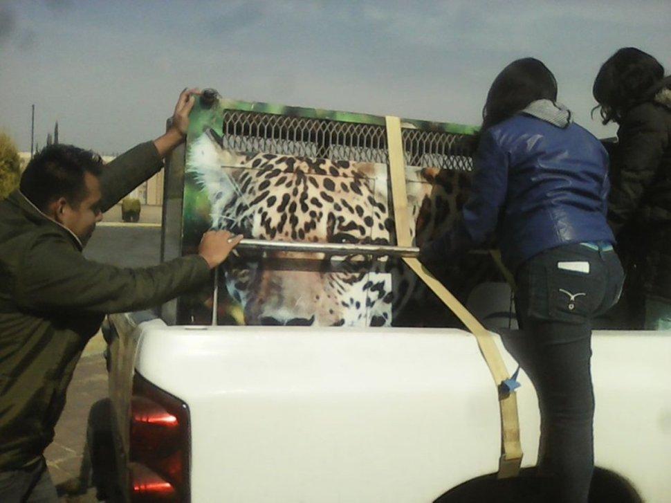 Trasladan a felinos a de Pachuca a santuario de la CDMX