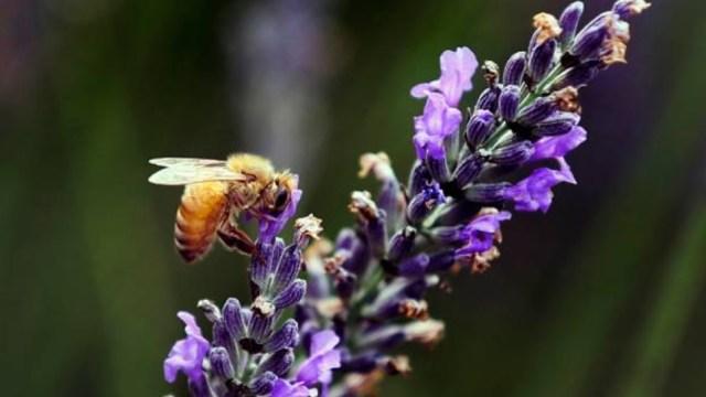 por cambio climatico y deforestacion colapsan abejas yucatan