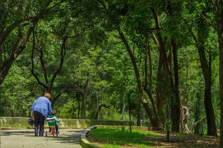 Resultado de imagen para bosque de chapultepec