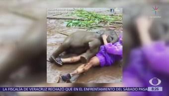 Bebé elefante juega con turista en el barro