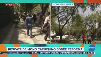 Brigada de Vigilancia Animal avistó desde el sábado al mono en Reforma