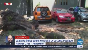 Cae Árbol Sobre Autos Lamartine Tres Picos Polanco