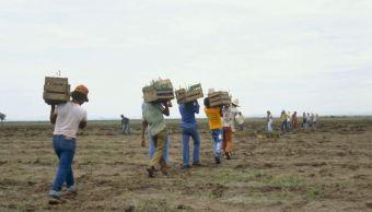 Sequía afecta siembra durante verano en Sonora