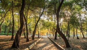 dan a conocer plan para rehabilitar bosque de chapultepec