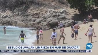 Estudios avalan limpieza en mar de Oaxaca