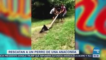 Extra Extra: Rescatan a un perro de una anaconda