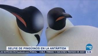 Extra Extra: Selfie de pingüinos en la Antártida