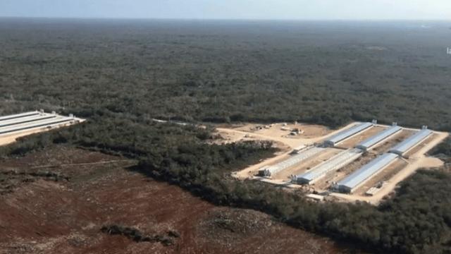 Granja porcícola en zona de cenotes tratará aguas residuales, informa la empresa