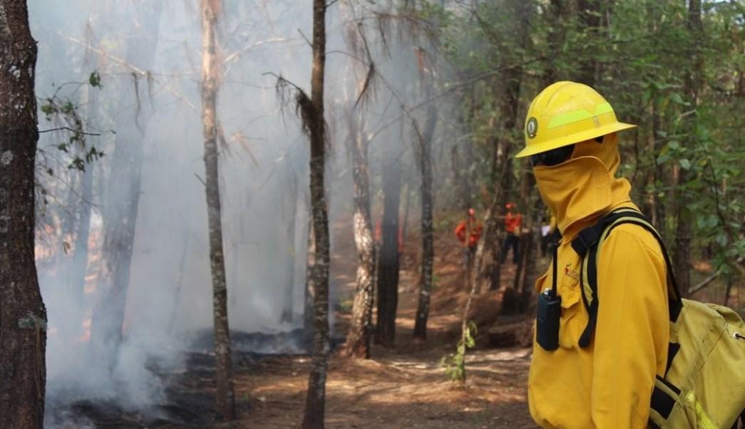 Se registra incendio forestal de mil 200 hectáreas en Campeche