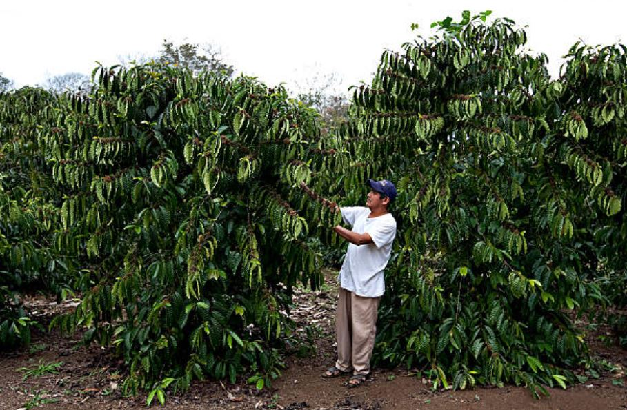 Inicia temporada de sequía en Veracruz