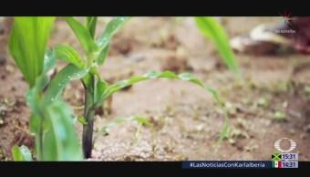 La agricultura y turismo, vulnerables ante el cambio climático