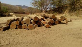 Al menos 70% de la madera que se consume en México es ilegal, revela UNAM. (Twitter/@PROFEPA_Mx)