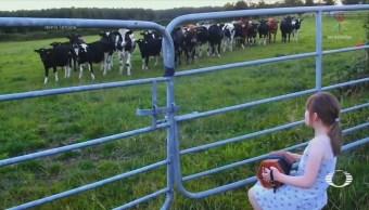 Niña cautiva vacas con su acordeón