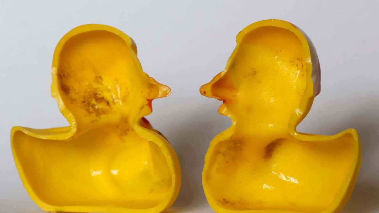 Patitos de hule, juguete común en la tina, son refugio de gérmenes