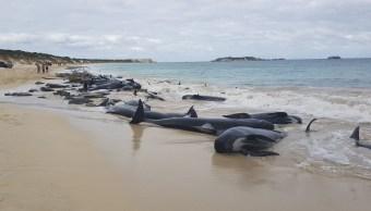Rescatistas australianos apresuran rescate de ballenas