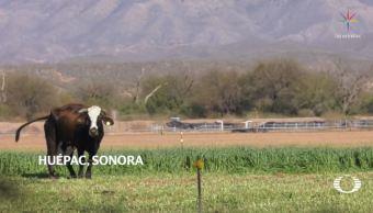 Grupo México incumple promesas para remediar ecocidio en río Sonora, en 2014