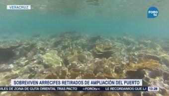Sobreviven Arrecifes Retirados Ampliación Puerto Veracruz