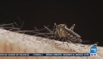 SSa sigue en la lucha contra el dengue, chikungunya y zika