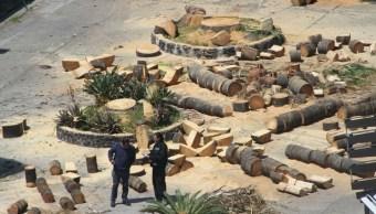 Frente Ciudadano Salvemos la Ciudad denuncia ecocidio en CDMX