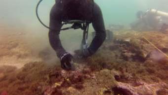 Sobreviven arrecifes trasladados por ampliación del puerto de Veracruz