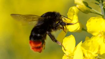 Bomberos retiran dos enjambres de abejas de escuela primeria en Cardel, Veracruz