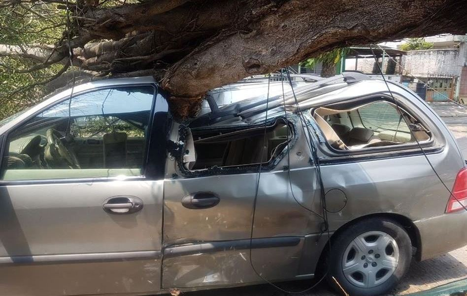 Frente frío 44 provoca caída de árboles en Veracruz; hay un lesionado