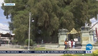 Árbol Tule Visitado Miles Personas Oaxaca