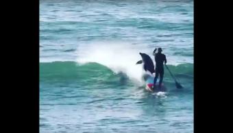 australia-delfin-delfines-surfista