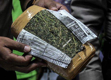 Aseguran más de una tonelada de marihuana en Tequila, Jalisco